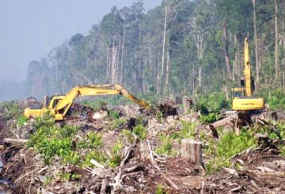 Contoh Ekosistem Rusak - Contoh Waouw